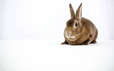Photograph - Brown Bunny by Jeanette Fellows