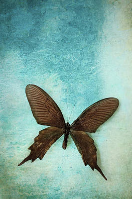 Photograph - Brown Butterfly Over Blue Textured Background by Stephanie Frey
