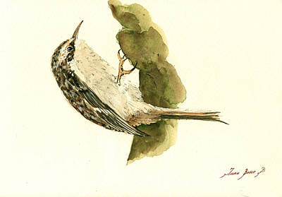 Songbird Painting - Brown Creeper by Juan  Bosco