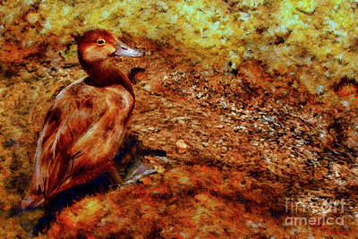 Photograph - Brown Duck by Blake Richards