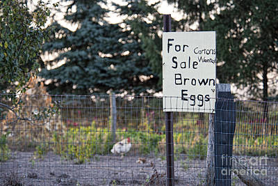 Photograph - Brown Eggs For Sale by David Arment