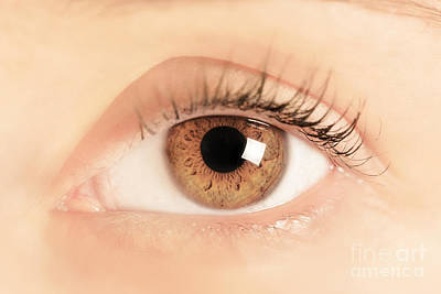 Eyelash Photograph - Brown Eye Of A Young Woman by Michal Bednarek