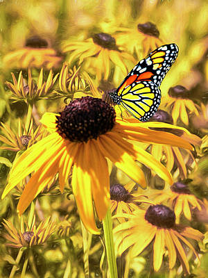 Photograph - Brown Eyed Susens And The Monarch by Diane Schuster