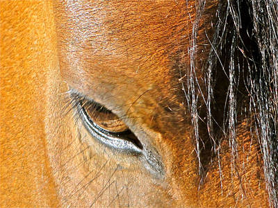 Brown-eyed Wild Horse Art Print by Liz Vernand