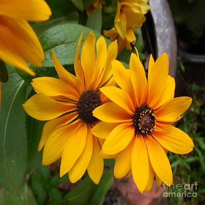 Eye Photograph - Brown Eyes - Outdoor Still Life by Eloise Schneider