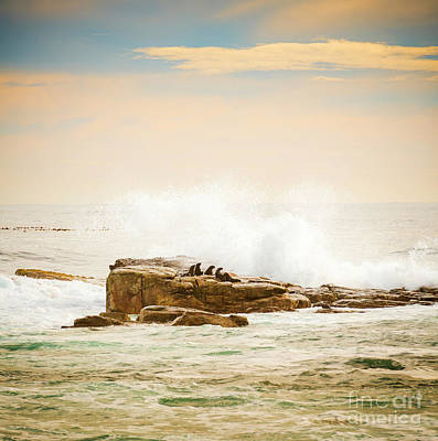 Photograph - Brown Fur Seals by Tim Hester