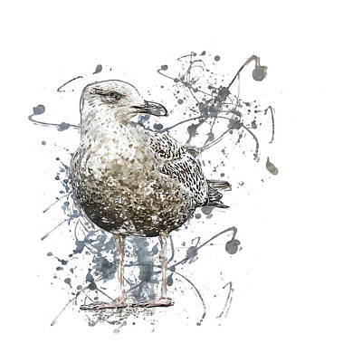 State Love Nancy Ingersoll Rights Managed Images - Brown gull Royalty-Free Image by Art By Jeronimo