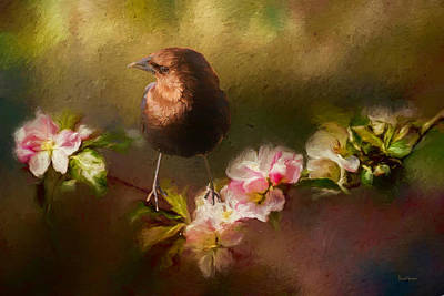Shower Head Painting - Brown-headed Cowbird - Painting by Ericamaxine Price