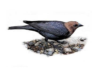 Digital Art - Brown Headed Cowbird by Yuichi Tanabe