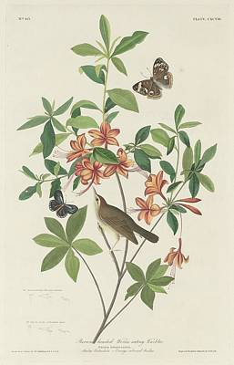 Wings Drawing - Brown-headed Worm-eating Warbler by Dreyer Wildlife Print Collections