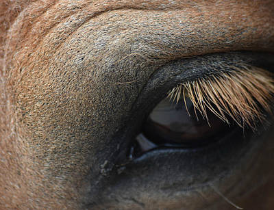 Photograph - Brown Horse Eye by Gary Smith