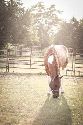 Photograph - Brown Horse In A Pasture by Kelly Hazel