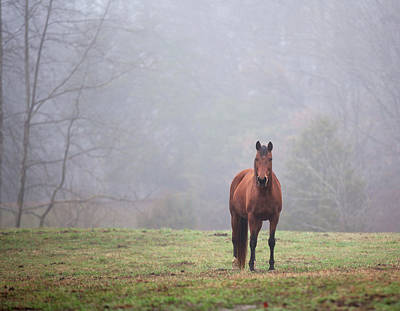 Photograph - Brown Horse In Virginia Fog by Jack Nevitt