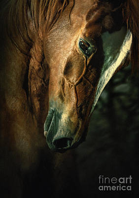 Photograph - Brown Horse Portrait by Dimitar Hristov
