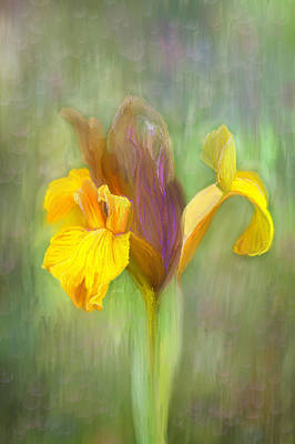 Brown Iris Art Print by Angela A Stanton