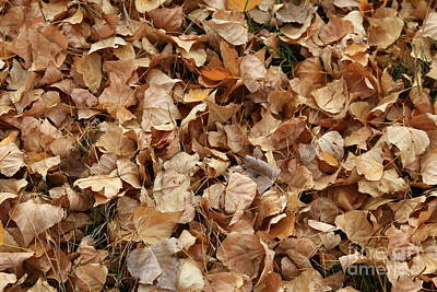 Photograph - Brown Leaf Carpet by Nareeta Martin