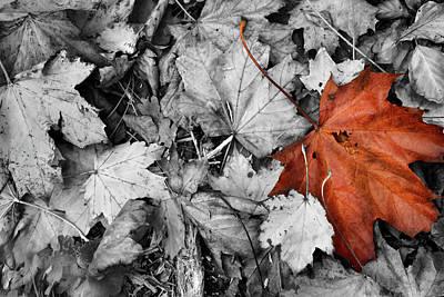 Brown Maple Leaf Art Print