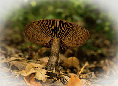 Photograph - Brown Mushroom With Upturned Cap by Douglas Barnett