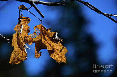 Photograph - Brown On Blue by Debby Pueschel