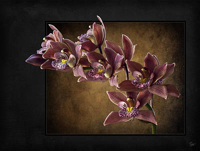 Photograph - Brown Orchids  by Endre Balogh