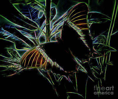 Photograph - Brown Page Butterfly by Steven Parker