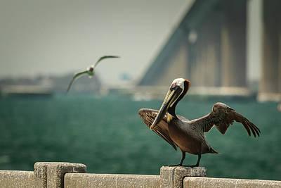 Photograph - Brown Pelican At Sunshine Skyway Bridge by Joni Eskridge