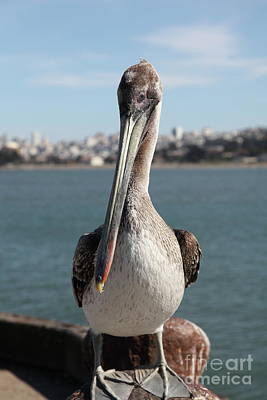 Photograph - Brown Pelican At The Torpedo Wharf Fising Pier Overlooking The City Of San Francisco 5d21685 by San Francisco Art and Photography