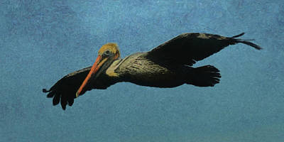 Digital Art - Brown Pelican Da2 by Ernie Echols