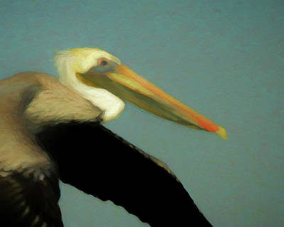 Digital Art - Brown Pelican Da3 by Ernie Echols