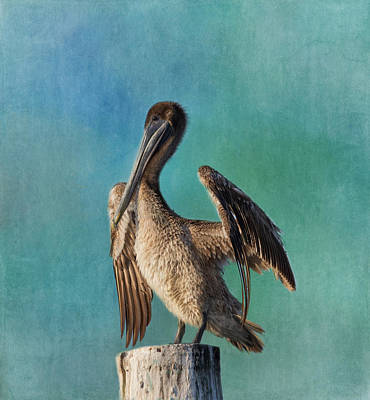 Photograph - Brown Pelican - Fort Myers Beach by Kim Hojnacki