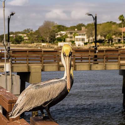 Photograph - Brown Pelican Head On by Douglas Barnett