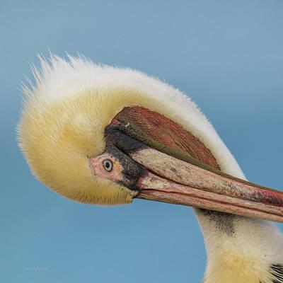 Photograph - Brown Pelican Head Shot II by Paul Treseler