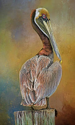 Photograph - Brown Pelican In Breeding Plumage by HH Photography of Florida
