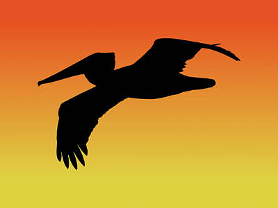 Drawing - Brown Pelican In Flight Silhouette At Sunset by Marcus England
