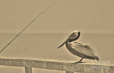 Photograph - Brown Pelican In Sepia by Bob Sample