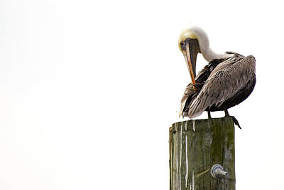 Art Print featuring the photograph Brown Pelican On Piling by Bob Decker