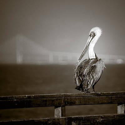 Photograph - Brown Pelican On St. Simons Island Pier - Bw by Chris Bordeleau