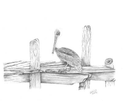 Drawing - Brown Pelican by Patricia Hiltz