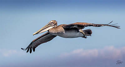 Photograph - Brown Pelican Portrait by Endre Balogh