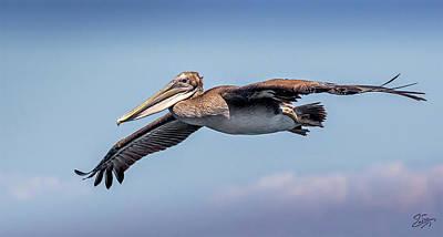 Photograph - Brown Pelican Portrait by Endre Balogh