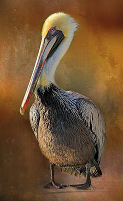 Photograph - Brown Pelican Portrait by HH Photography of Florida