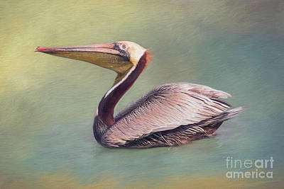 Digital Art - Brown Pelican Portrait by Sharon McConnell