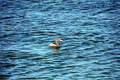 Photograph - Brown Pelican Riding The Waves by Debbie Oppermann