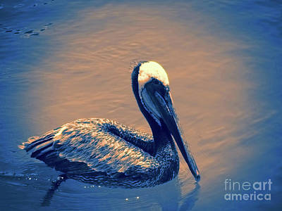 Photograph - Brown Pelican by Steven Parker