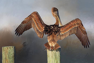 Brown Pelican - Strike A Pose Print by HH Photography of Florida
