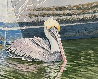 Painting - Brown Pelican Swimming by Don Bosley