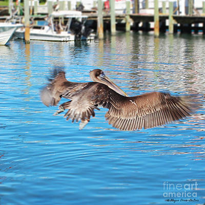 Photograph - Brown Pelican Taking Flight by Megan Dirsa-DuBois