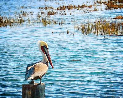 Photograph - Brown Pelican by Timothy Bulone