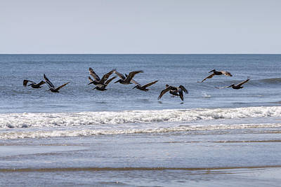 Photograph - Brown Pelicans In Flight by Liza Eckardt
