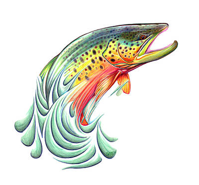 Brown Trout Drawing - Brown by Silas Beck